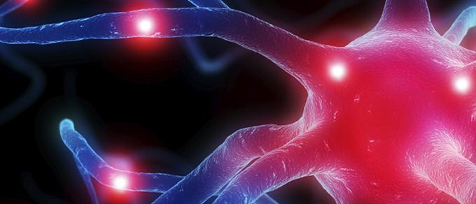 Neuroscience (2)