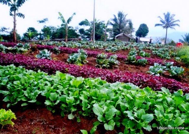 Menilik Pembangunan Sektor Pertanian di Indonesia
